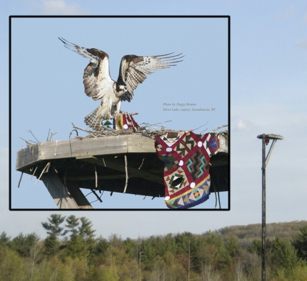 Osprey Nest and Pole