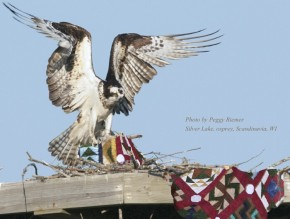 Quilt on Osprey Nest