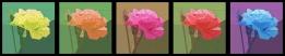 Rose Quilt Paper Piecing